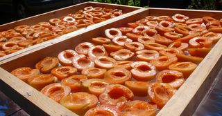 Sun drying apricots